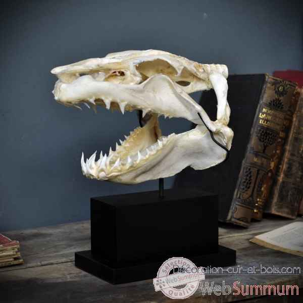Crane complet de requin mako sur socle rectangle Objet de Curiosite -PU425-2